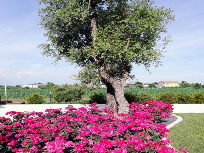 sistemazione giardino privato te26 pineglen
